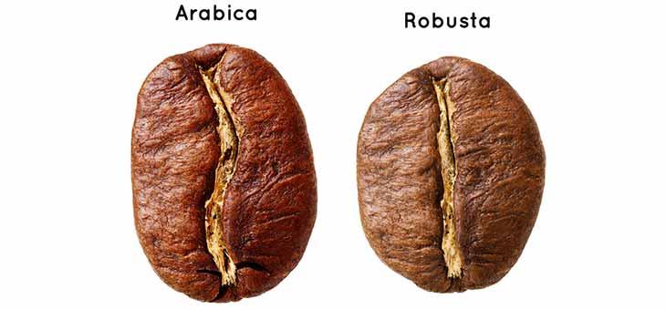 Differences Between Arabica and Robusta Coffee Beans Idealan dan uz šoljicu savršene kafe
